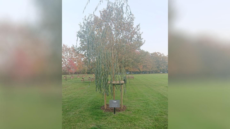 100 Year Celebration Tree